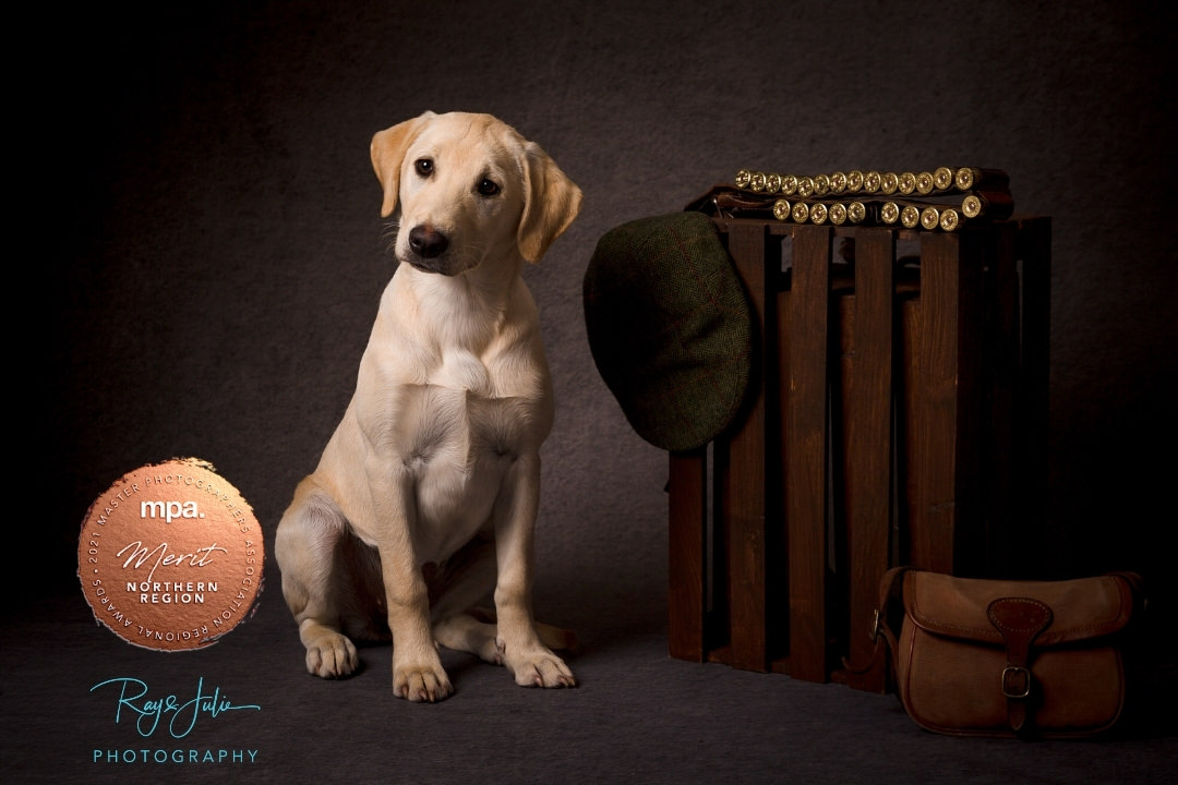Award winning East Yorkshire and Hull pet portrait photography
